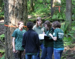 Forestry1