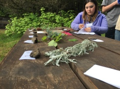 forestry-station_envirothon-2016