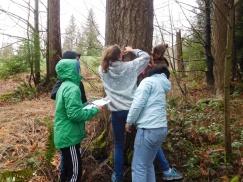 3-29-17 Forestry - Measuring Tree Diameter